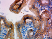 15B8_Purified_beta_Catenin_1_Antibody_3_040519.png