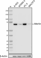 W19231A_PURE_Merlin_Antibody_1_040721.png
