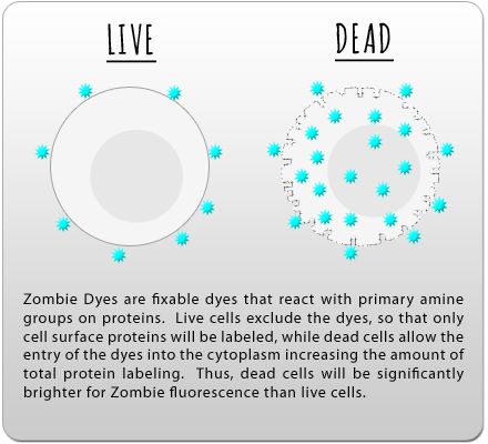 Zombie Dyes