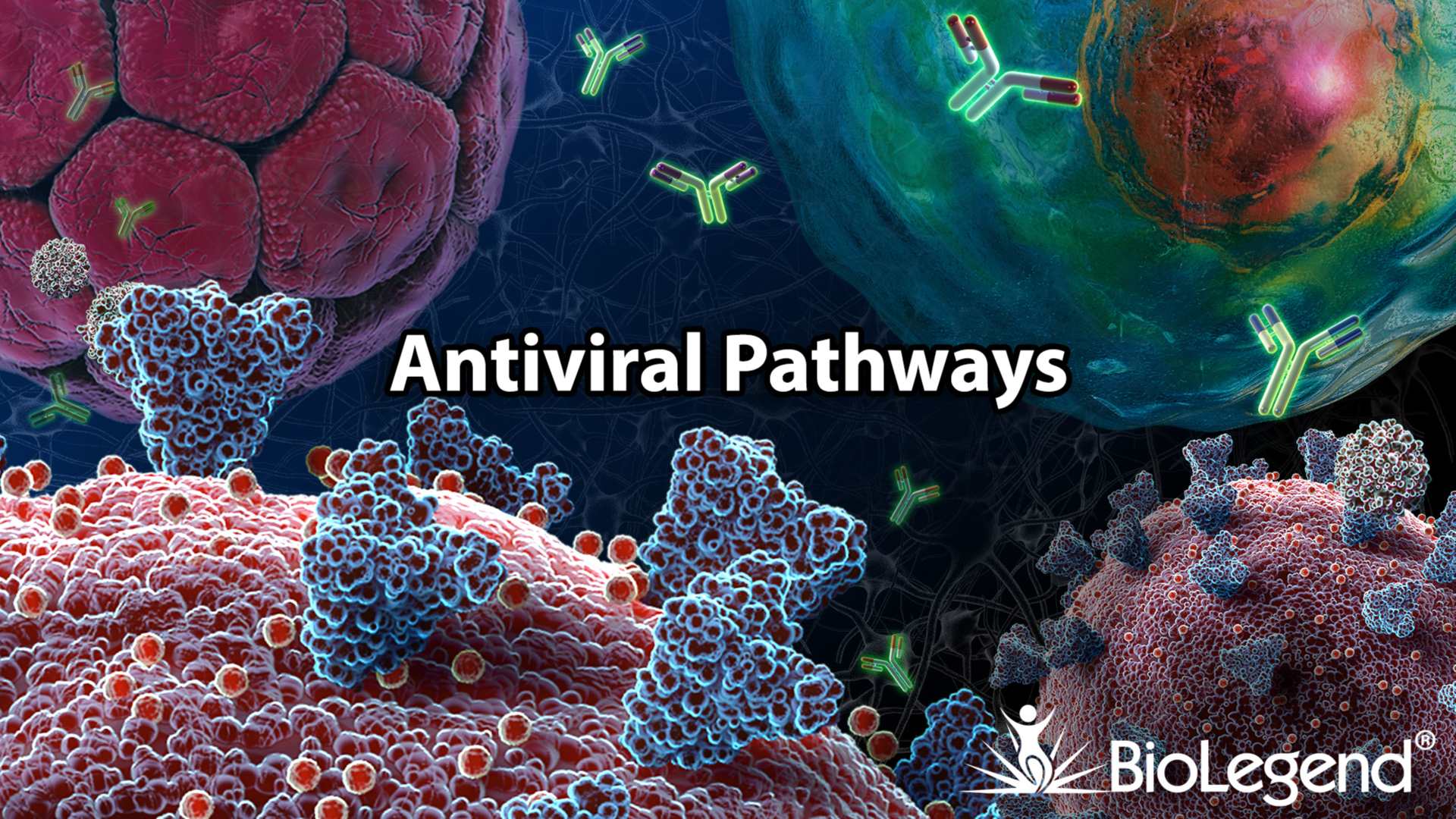 antiviral pathways