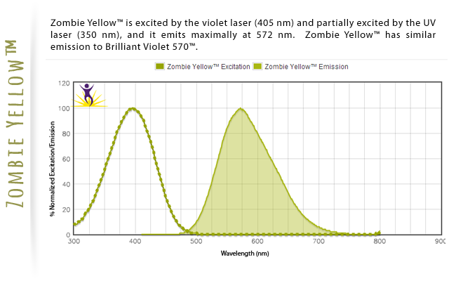 Zombie Yellow is excited by the violet laser (405nm) and partially excited by the UV laser (350nm), and emits maximally at 572 nm.  Zombie Yellow has similar emission to Brilliant Violet 570.
