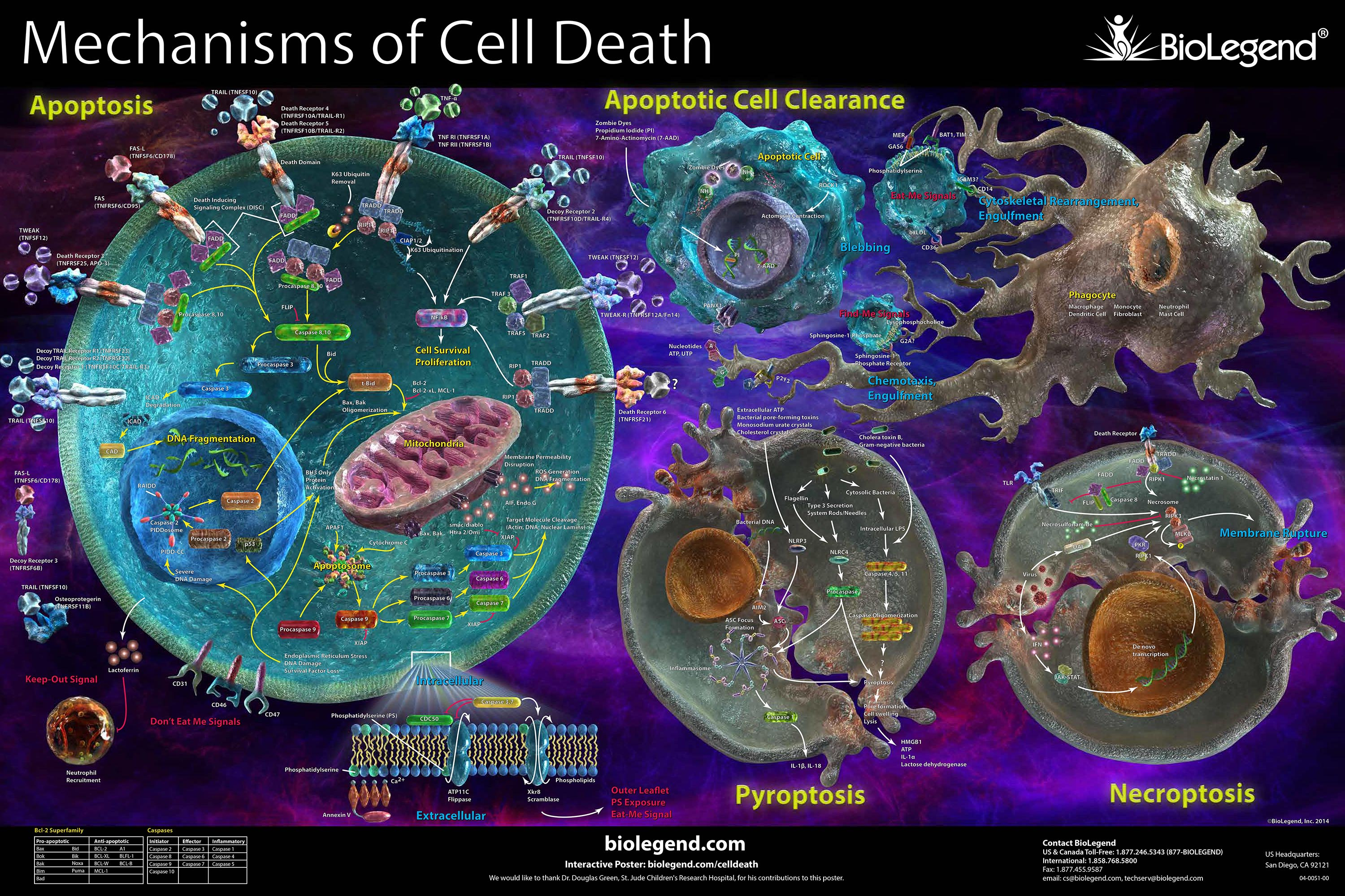 Mechanisims of Cell Death