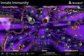 Innate Immunity Pathway