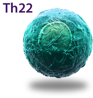 Th22 Cell