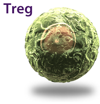 Treg Cell